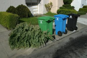 Recycle your Christmas tree with Treecycle