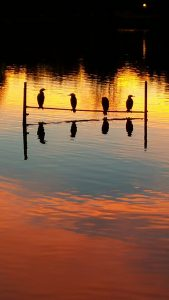 Photo of birds with lake reflection